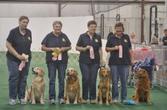 Team Obedience