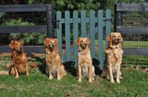 From L to R: Doc #1364, Eli #1365, Ziti #3010 and Finn #2710