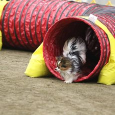 Reggie Tunnel