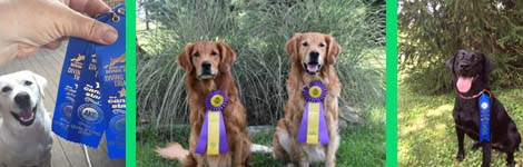 Congratulations on the Labor Day ribbons!