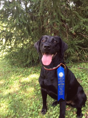 Phillie proudly presents her ribbon