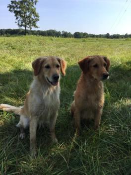 Harper and Ziti, First Master Pass 8/20/2017